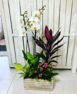 cesta de plantas de interior con orquidea