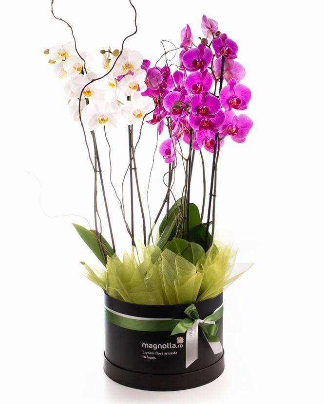 orquídeas enviar a Zaragoza