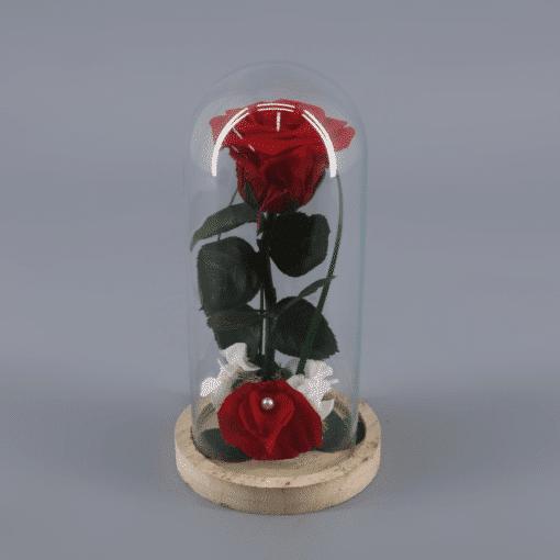 Rosa Preservada en cupula