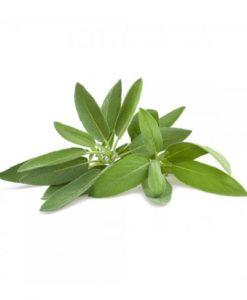 Comprar Salvia en maceta