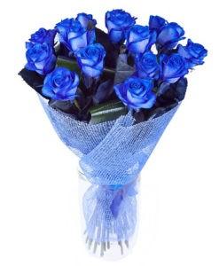 rosas azules zaragoza