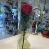image_50414593