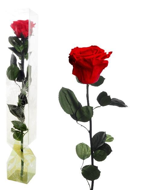 rosa eterna roja regalar zaragoza